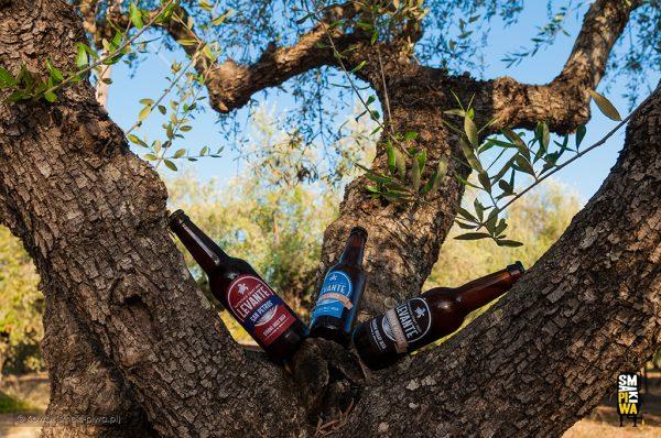 Piwa z browaru Levante w swoim naturalnym środowisku czyli gaju oliwnym