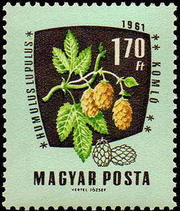 Chmiel. Węgry, 1961 (źródło: agrarphilatelie.de)